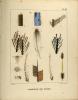Des diverses modifications dans les formes et la coloration des plumes. (Tiré des Mémoires...de Genève tome XVIII, 2ème partie).. FATIO, Victor: