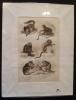 Gravure animalière : singes (pl.42),  tirée de l'Histoire naturelle de Buffon. Buffon