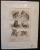 Gravure animalière : singes (pl.36), tirée de l'Histoire naturelle de Buffon. Buffon