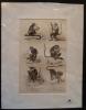 Gravure animalière : singes (pl.39), tirée de l'Histoire naturelle de Buffon. Buffon
