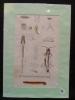 Planche sciences naturelles : myriapodes ?. Anonyme