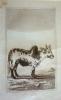 Gravure animalière, planche n°19 du Buffon de la jeunesse : Zébu. Buffon