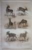 Gravure animalière, planche n°26 de l'Histoire naturelle de Buffon : Bosbok, Ritbok, Bubale, Canna, Condoma, Nylgau. Buffon