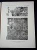 Inventaire des mosaïques de la Gaule et de l'Afrique. Collectif