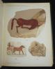Documents de fouilles de l'Institut Français d'Archéologie Orientale du Caire, Tome II : Catalogue des ostraca figurés de Deir El-Médineh (2 volumes, ...