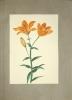 Fleurs peintes à l'aquarelle.. GRENIER, Charlotte