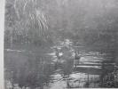 Aspect du Terrain en Indochine du Nord . FORCES TERRESTRES du NORD-VIETNAM (2e Bureau)