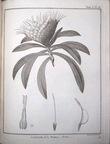 Voyage aux sources du Nil, en Nubie et en Abyssinie pendant les années 1768, 1769, 1770, 1771 & 1772 et Quatre voyages dans les pays des Hottentots et ...