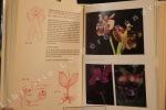Orchidee spontanee d'Italia. Monografia e iconographia. DEL PRETE, Carlo - TOSI, Giuseppe