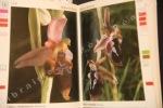 Guide des orchidées d'Europe dans leur milieu naturel. DELFORGE, Pierre - TYTECA, Daniel
