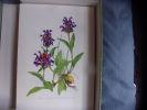 Flore 1 et 2. Richard Krausel