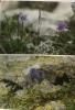 Le monde fascinant de la flore alpine + Atlas des fleurs des Alpes --- 2 livres. Lippert Wolfgang  Plantain Paul-Henry Danesch
