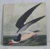 Peintre naturaliste. John James Audubon