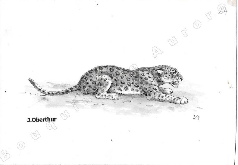 """Panthère d'Afrique.Dessin original à l'encre de chine et au lavis sur papier type Canson, cachet """"J. Oberthur"""" en bas à gauche.. OBERTHUR (Joseph) ..."""