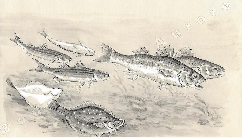 """Poissons Amphibiotiques.Dessin original à l'encre de chine, au lavis et rehaut de gouache blanche sur papier type Canson, cachet """"J. Oberthur"""" en bas ..."""