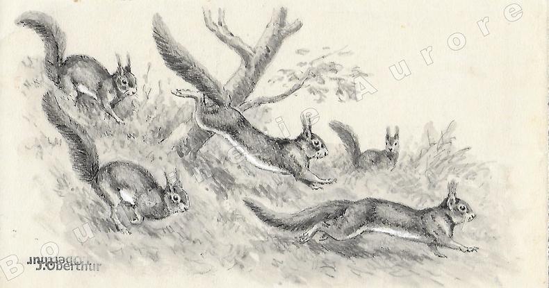 """Ecureuils en voyage.Dessin original à l'encre de chine, au lavis et rehauts de gouache blanche sur papier type Canson, cachet """"J. Oberthur"""" en bas à ..."""