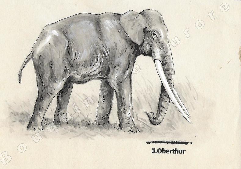 """Elephus Antiquus (éléphant antique).Dessin original à l'encre de chine, au lavis et rehauts de gouache blanche sur papier type Canson, cachet """"J. ..."""