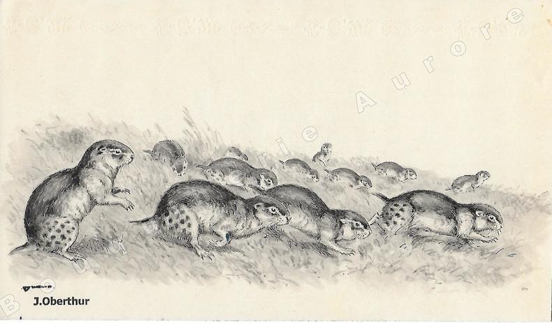 """Exode de Lemmings.Dessin original à l'encre de chine et au lavis sur papier type Canson, cachet """"J. Oberthur"""" en bas à gauche.. OBERTHUR (Joseph) ..."""