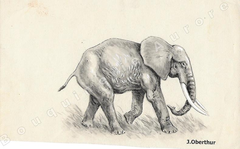 """Elephas Planifrons (éléphant).Dessin original à l'encre de chine, au lavis et rehauts de gouache blanche sur papier type Canson, cachet """"J. Oberthur"""" ..."""