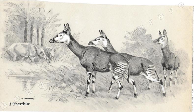 """L'Helladotherium.Dessin original à l'encre de chine et au lavis sur papier type Canson, cachet """"J. Oberthur"""" en bas à gauche.. OBERTHUR (Joseph) ..."""