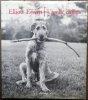 Vies de chiens.. [Photographie] - ERWITT (Elliott).
