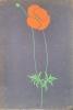 Pavot orange.. LESBROS (Alfred).