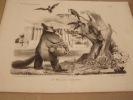 Le Renard et les Corbeaux - Lithographie originale en noir sur Velin blanc.. Traviès de Villers,Charles Joseph