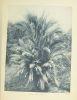 Atlas des plantes ornementales et curieuses de Madagascar, publié à l'occasion de l'Exposition coloniale internationale Paris 1931.. [MADAGASCAR] ...