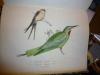 Richesses ornithologiques du Midi de la France, ou description méthodique de tous les oiseaux observés en Provence et dans les départements ...