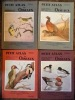 Petit atlas des oiseaux - fascicule I à IV - passereaux, rolliers, pics, perroquets, rapaces nocturnes, rapaces diurnes, pigeons, gallinacés, rales, ...