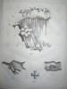 Elémens d'Histoire Naturelle, présentant dans une suite de tableaux synoptiques, accompagnés de Figures. Minéralogie - Géologie ; Botanique ; ...