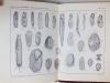 Studi sui Protozoi del terreno. GRANDORI, Remo e Luigia