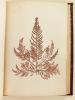 Herbier Plantes Marines [ Algues ]. Anonyme