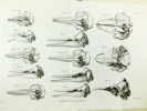 Recherches sur les Ossemens Fossiles, où l'on rétablit les Caractères de plusieurs Animaux dont les Révolutions du globe ont détruit les espèces. (10 ...