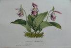 Flore des serres et des jardins de l'Europe ou description et figures des plantes les plus rares et les plus méritantes. Tome sixième. .