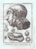 Anatomie. Planches provenant de la Nouvelle édition du Dictionnaire raisonné des sciences, des arts et des métiers, avec leur explication. .