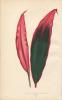 Plantes (Les) à feuillage coloré. Histoire description. Culture. Emploi des espèces les plus remarquables pour la décoration des Parcs. Jardins. ...