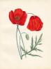 Recueil romantique (1ere moitié du XIXe) de 53 fleurs ou bouquets soigneusement aquarellés.. [Aquarelles originales]