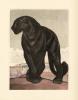 La Comédie des animaux qu'on dit sauvages. Illustrations originales en couleurs de Paul Jouve.. [Jouve] Demaison (André) :