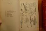 Arbres Arbustes et Fleurs de Pleines Terres. 1284 genres, 6730 Espèces dont 2020 figurées.. FOURNIER, Paul.