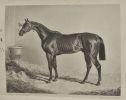 Nemrod, ou l'Amateur de chevaux de courses,observations sur les méthodes les plus nouvelles de propager, d'élever, de dresser et de monter les chevaux ...
