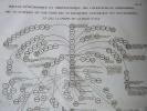 GRAVURE ORIGINALE. Tableau généalogique et chronologique des couréyschs, de Mohammed, des 10 schérifs de son tems, des 72 khaliphes universels ses ...