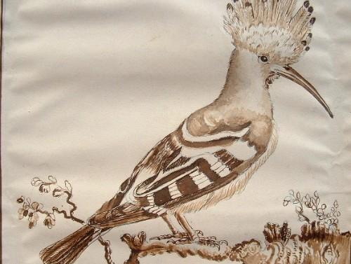 Deux planches de dessins d'oiseaux, d'après Buffon..