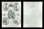 Nervenlehre.. Erdl, M(ichael) P(ius) (1815-1848):