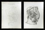 Pulsadern des Beckens - Arteria hypogastrica in femina.. Oesterreicher, Johann Heinrich (1805-1843):