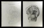 Pulsadern des Beckens - Arteria hypogastrica in viro.. Oesterreicher, Johann Heinrich (1805-1843):