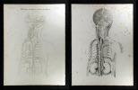Pulsadern des Kopfs, Halses, u. der Brust.. Oesterreicher, Johann Heinrich (1805-1843):