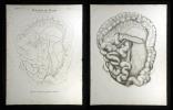 Pulsadern des Darms - Arteria mesenterica superior et inferior.. Oesterreicher, Johann Heinrich (1805-1843):