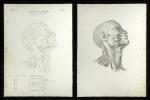 Pulsadern des Kopfes - Carotis communis.. Oesterreicher, Johann Heinrich (1805-1843):