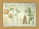 Pflanzenwachstum..